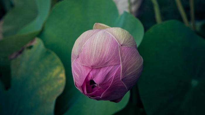 sarah-ball-unsplash_buddha_flowers